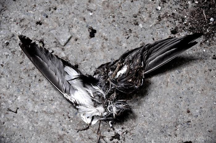 bird-school-7004