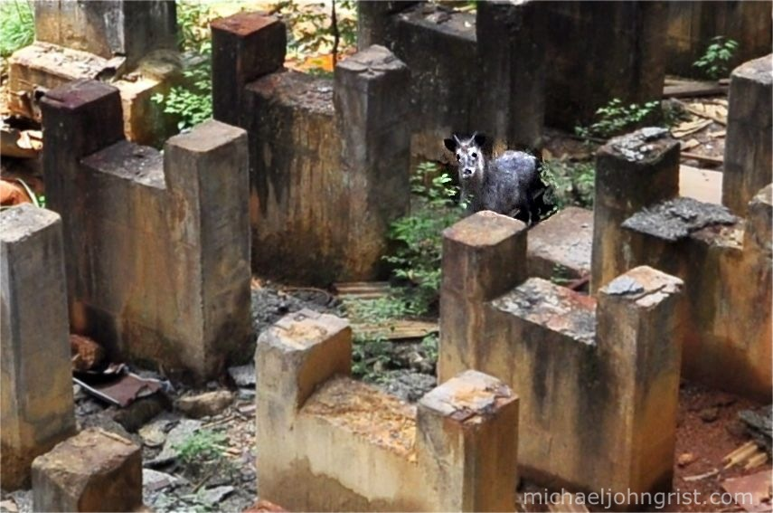 taro mining town ruins iwate 1